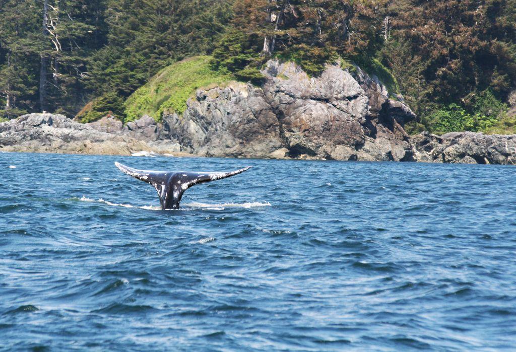 Tofino, Kanada: kjer surferjem rad preseka pot medved
