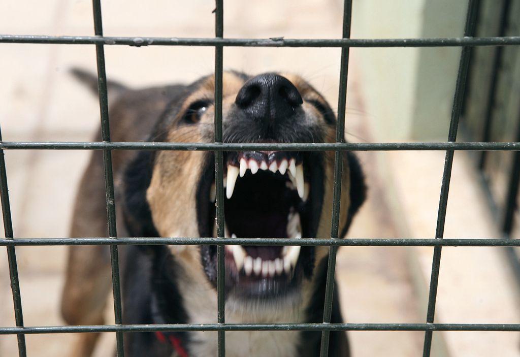 Zaradi pasjih bojev bi šli lahko do pet let v zapor