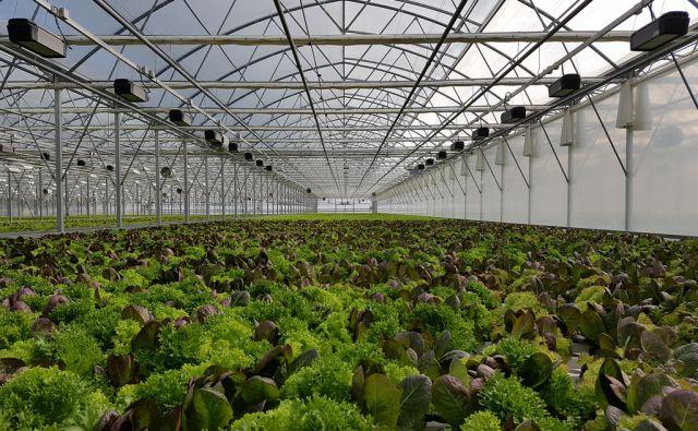 Pan organic - rastlinjak