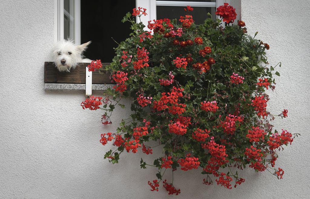 Kam so šle vse rožice?