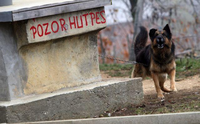 Slovenija, Ormoz, 21.11.2011 - hut pes  foto:Tadej Regent/Delo