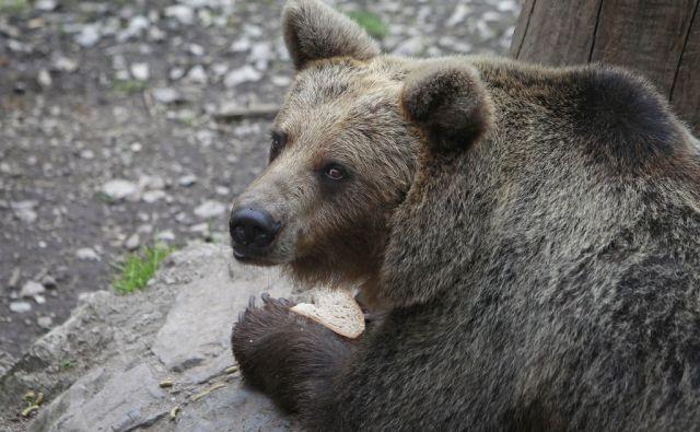 lvi*medved