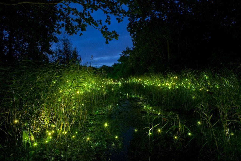 Deloskop izpostavlja: Svetlobna gverila v Botaničnem vrtu