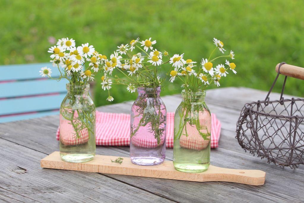 Odprta kuhinja: Kamilica, vonj z vrtov babic
