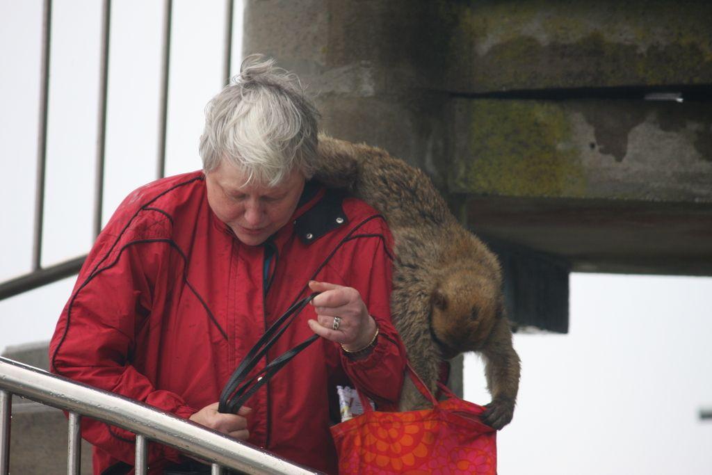 Na Gibraltar so opice prišle še pred Britanci