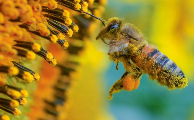 GERMANY-WEATHER-BEE-FEATURE