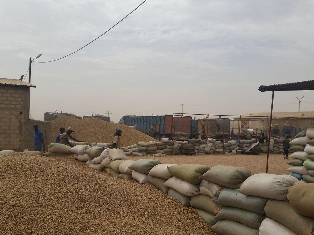 Slovenci v Senegalu: Začeli so z mlekom v prahu, zdaj luščijo arašide