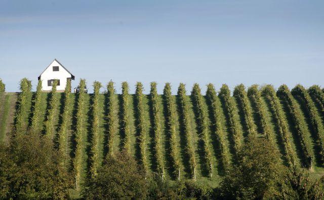 Trgatev po starih običajih, Bistrica ob Sotli, 23. september 2016 [Bistrica ob Sotli,trgatev,vinogradi,grozdje]