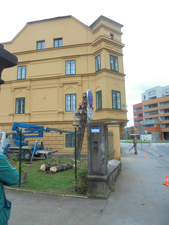 Drevo kot stranska žrtev obnove Galetovega gradu
