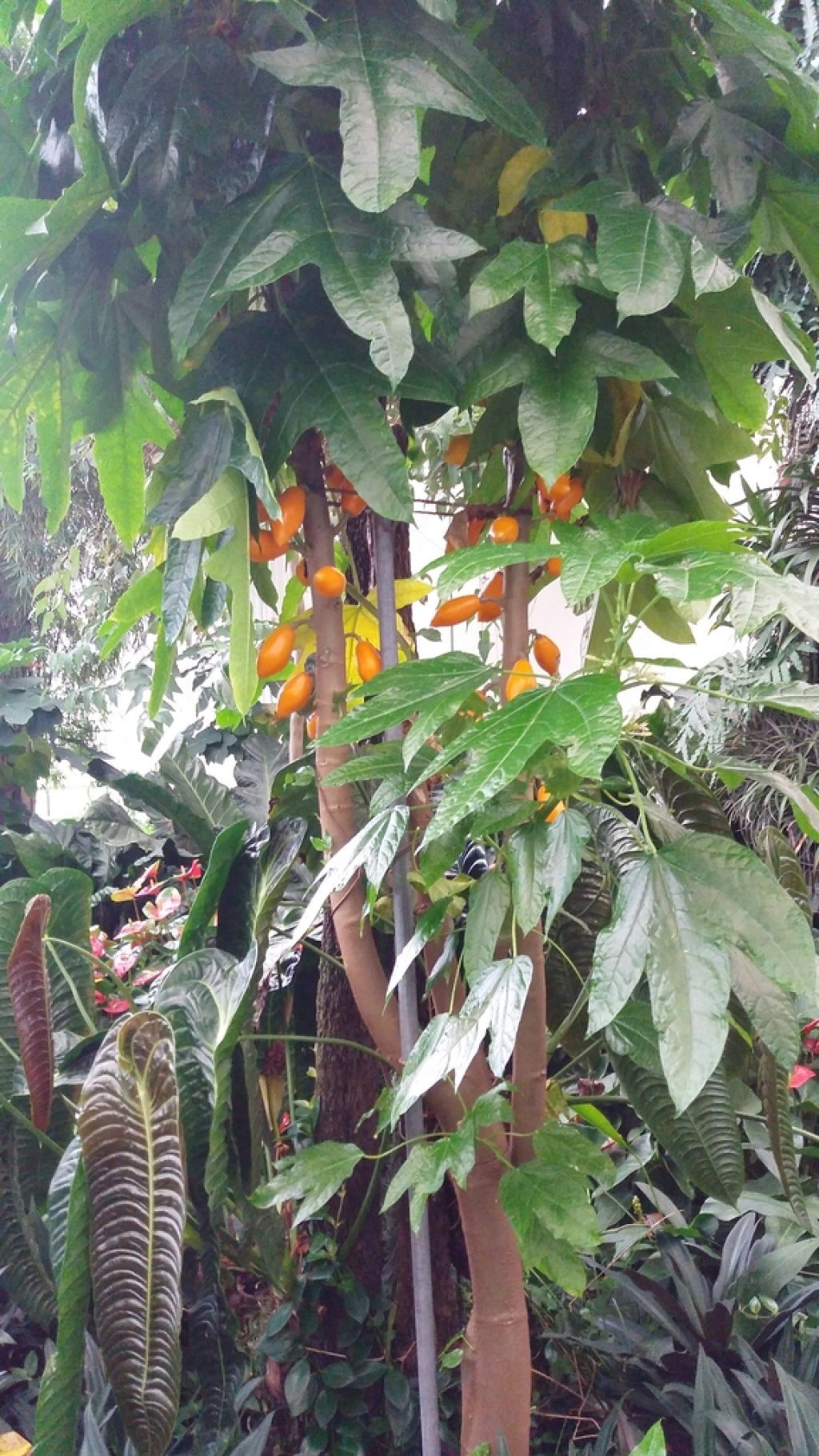 Geotermalna voda za vzgojo orhidej