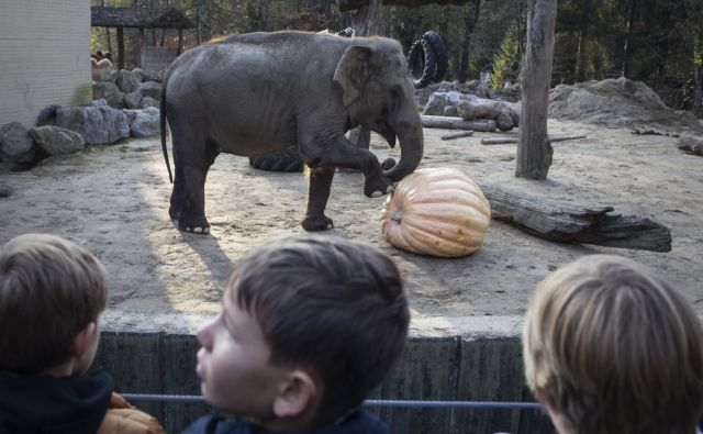 zoo, slon, buča