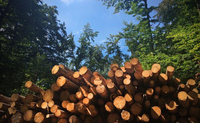 jer*Gozdovi, drevesa, les, motivi