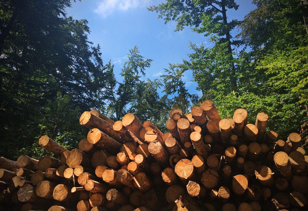 Domači lesarji težko do slovenskega lesa