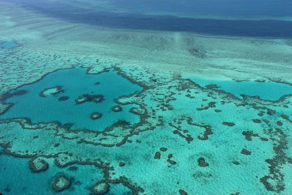 Veliki koralni greben vse manjši
