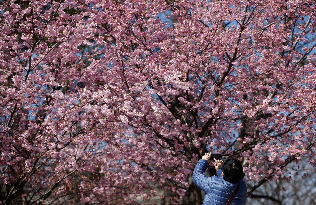 Zasavska hvalnica norosti: Kakšna pomlad!