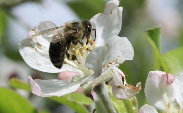 Čebele na Trojanah, 22. aprila 2014