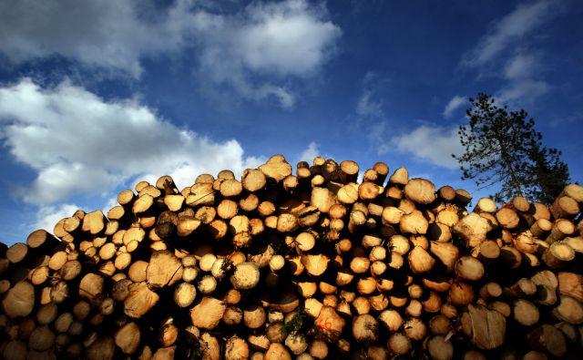 Lesna industrija,Kočevska reka Slovenija 18.11.2016 [Les,leseni hlodi]