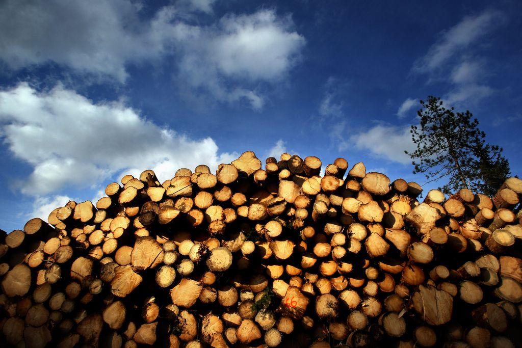 Škoti nameravajo postaviti največjo žago v Sloveniji