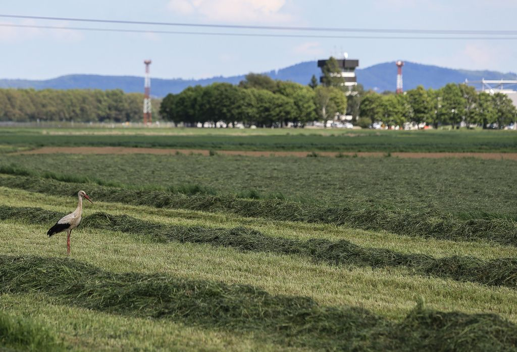 Magna: Slovenija ostala naša prva izbira