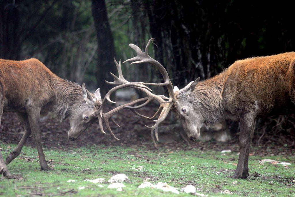 O slovenskem gozdu, jelenjadi  in lovcih