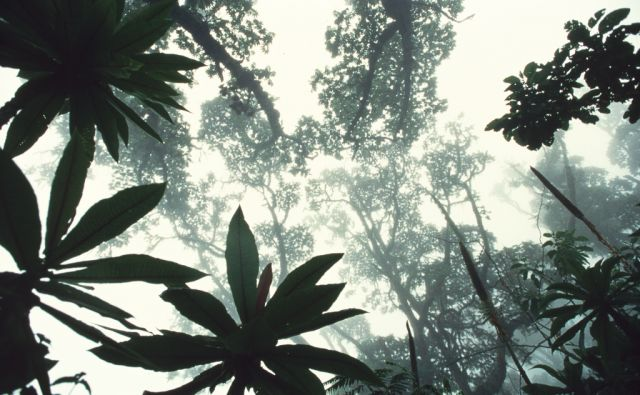 *ipa*tropski gozd