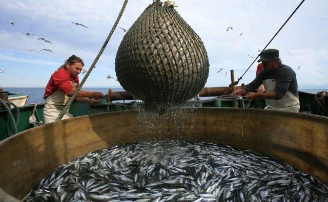 uho*Ribiči - Piranski zaliv