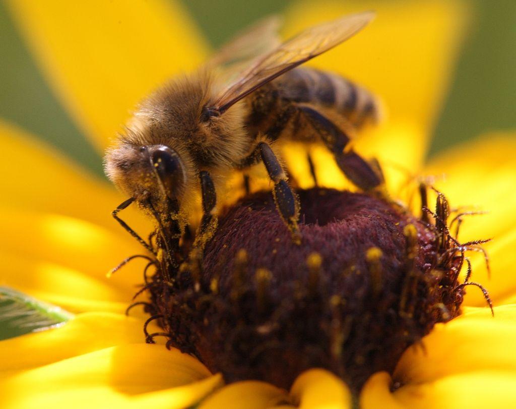 Mesta so pravi velnes za čebele