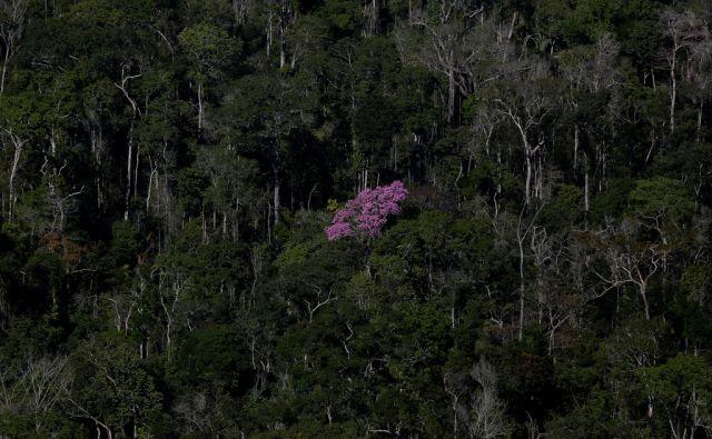 BRAZIL-DEFORESTATION/