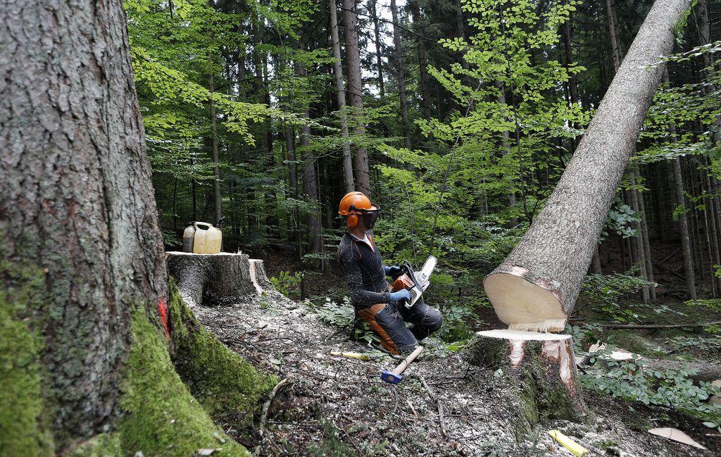 Sloles je branik pred propadom lesarstva