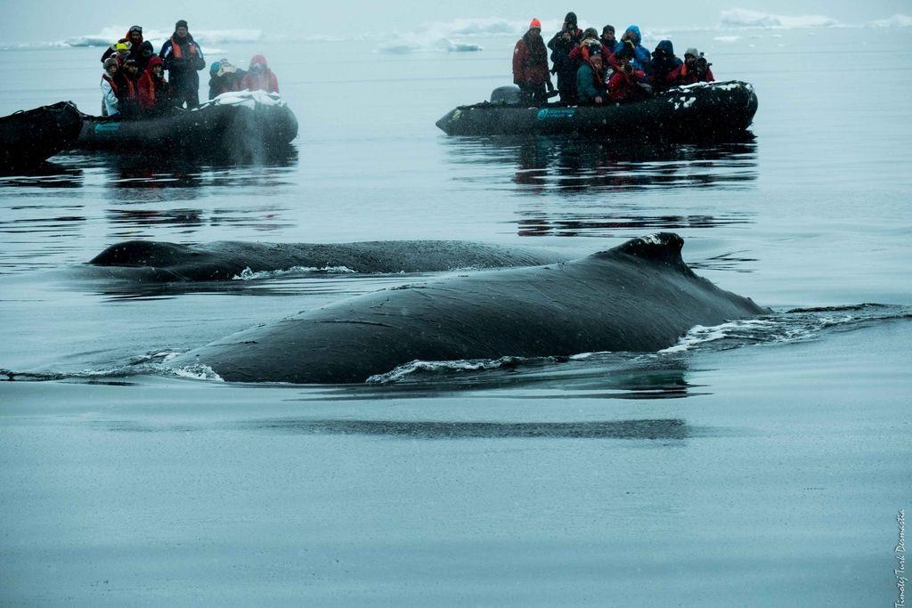 Antarktika, raj za znanstvene raziskave