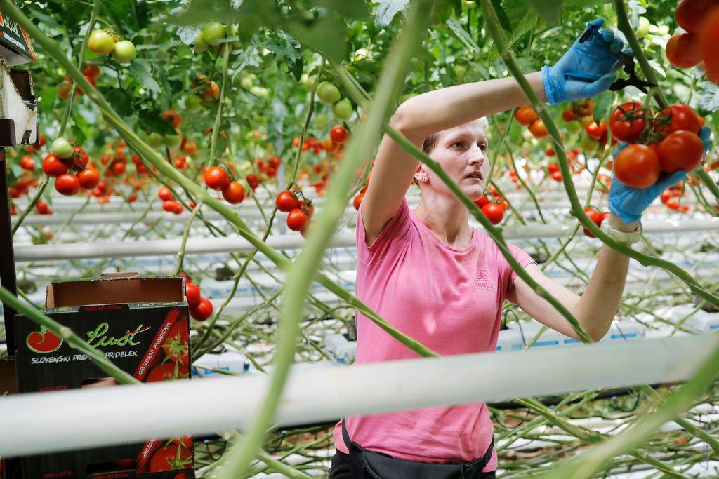 Začetek konca skupne kmetijske politike?