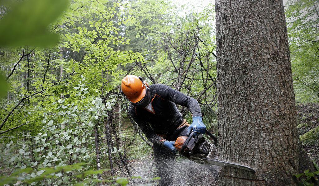 Sečnja lesa usodna za 61-letnika