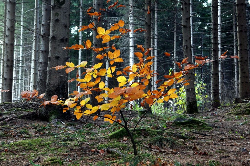 Prihaja bioekonomija, temelj zanjo je tudi les