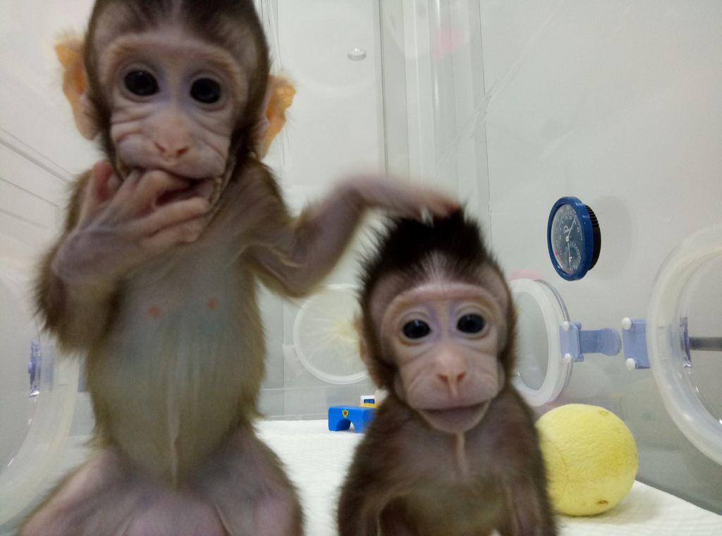 Kitajski znanstveniki odprli pot kloniranju ljudi?