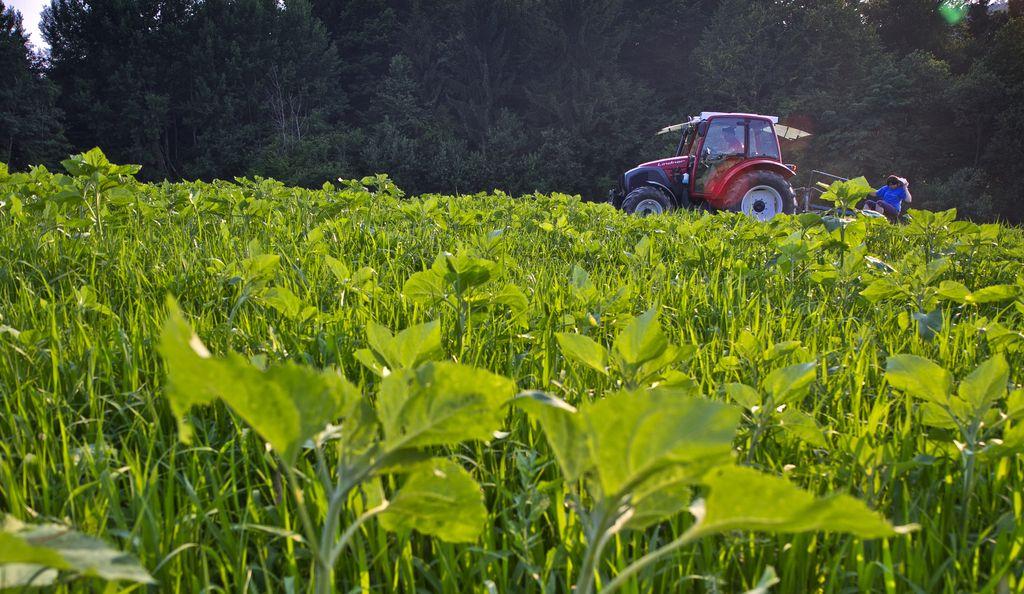 Kmetijstvo bo moralo postati še bolj trajnostno