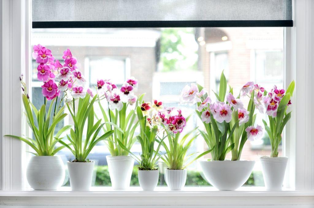 Deloindom: Orhideje - žejne zračne vlage