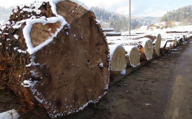 kotnik*Prizorišče dražbe najvrednejšega slovenskega lesa