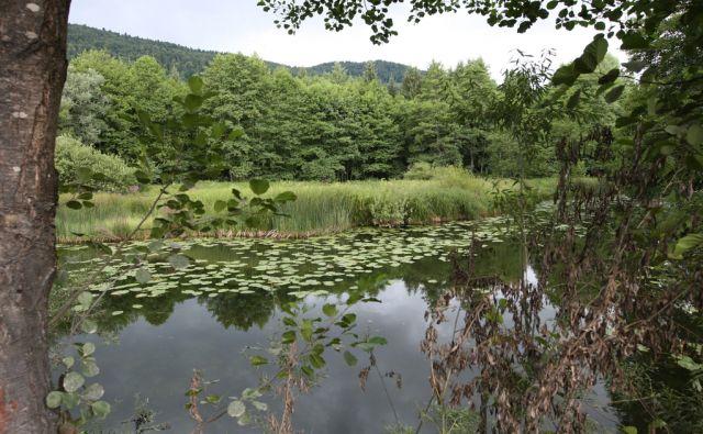 Slovenija, kočevje, 20.Julij2011, Učna pot po Kočevskih gozdovih. Foto: Igor Zaplatil/Delo