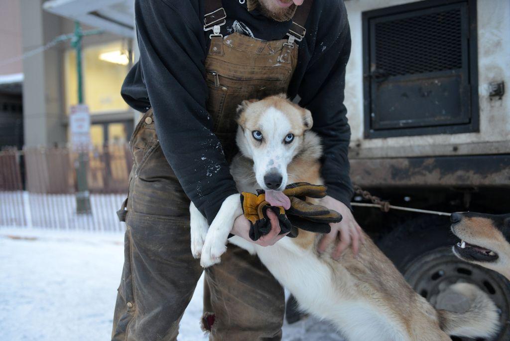 Ekstremna pasja dirka po Aljaski.
