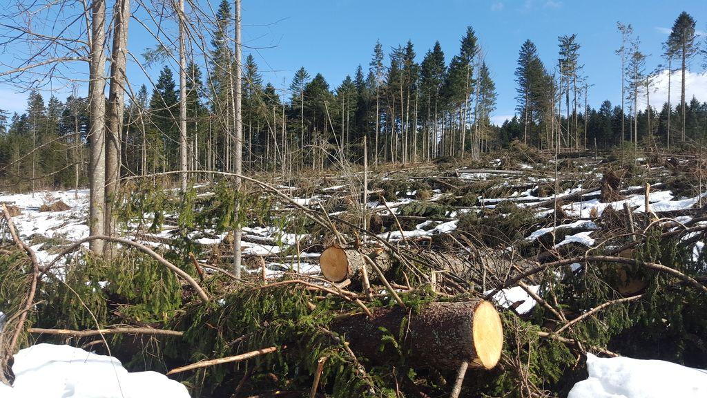 Naravne ujme spravljajo gozdarje v negotovost