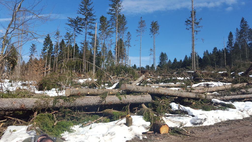 Gozdovi so bogastvo Zemlje