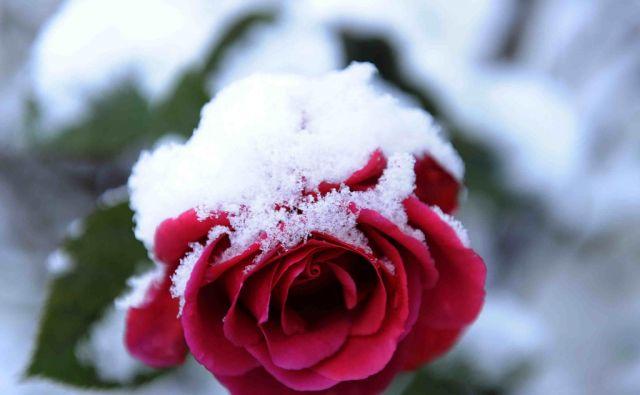 reut*vrtnica