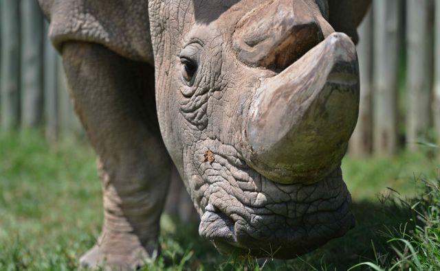 FILES-YEAR2016-KENYA-AFRICA-ANIMAL-CONSERVATION