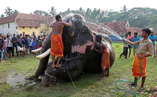 INDIA-ANIMALS/