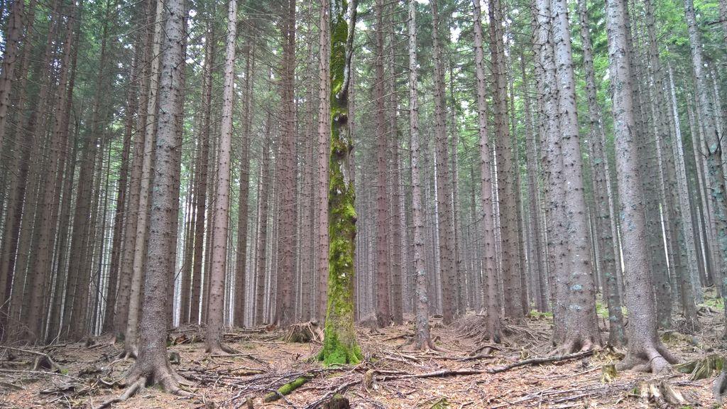 Razkrito skrivno življenje dreves – mar res?