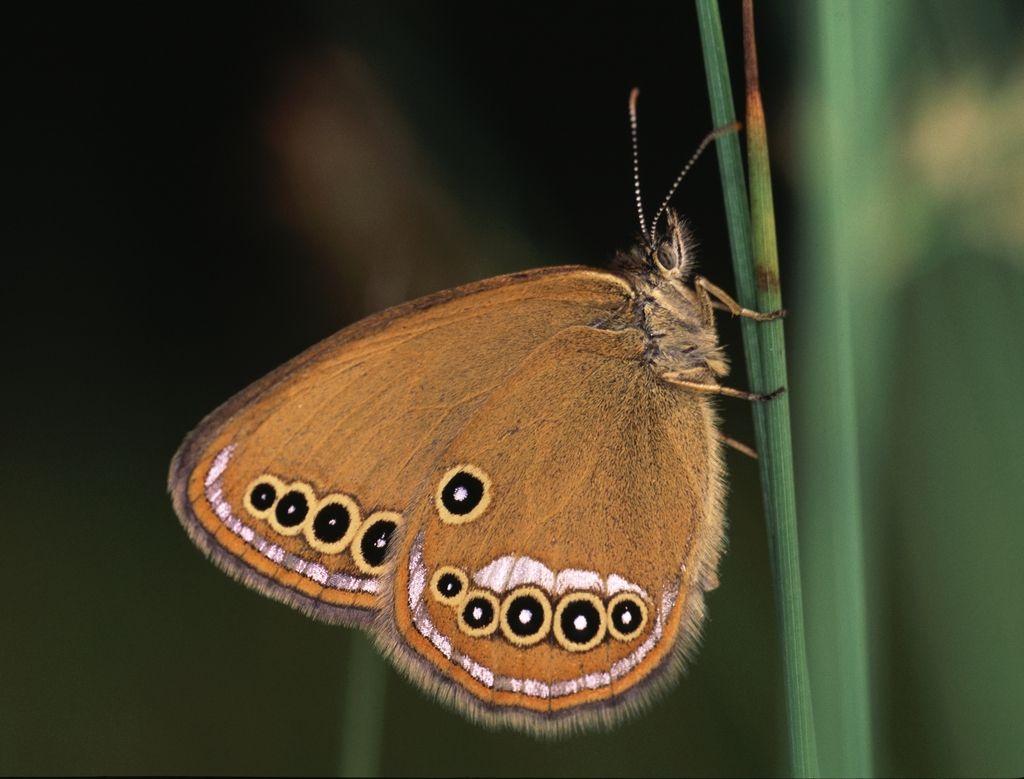 Poljuba za metulje, hrošče in dvoživke