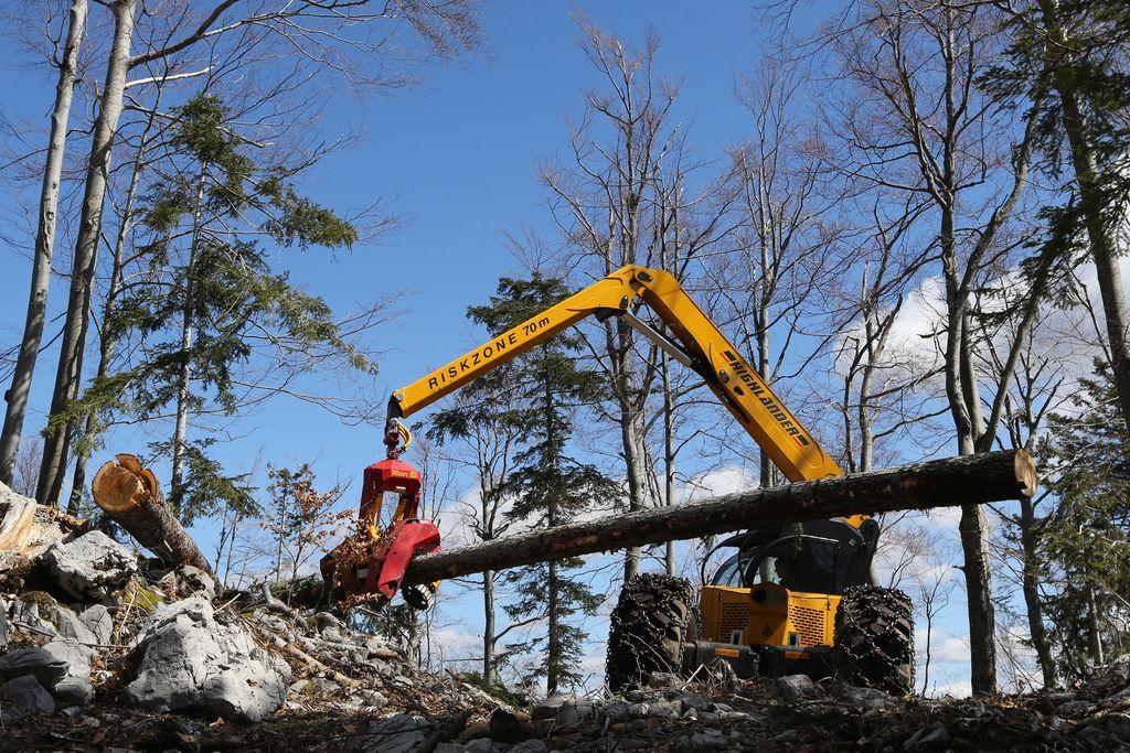 Posek poškodovanega drevja poteka pospešeno