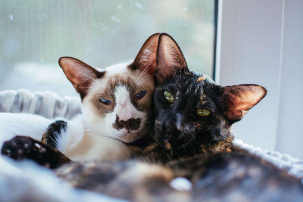 Deloindom: Zvoki elektronskih naprav motijo hišne ljubljenčke