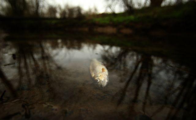 Onesnaženje in ponovni pogin rib v potoku Tojnica. Vrhnika, Slovenija 10.aprila 2018. [potoki,vode,onesnaževanje,pogin rib,ribe,Tojnica,Vrhnika,Slovenija]