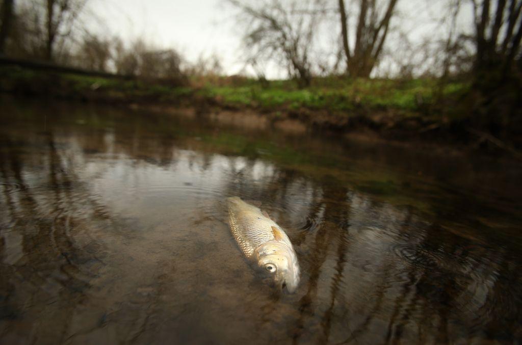 V Tojnici poginile vse ribe, ki so se tja vrnile po požaru